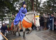 参拝客が見守る中、函館八幡宮の境内を駆け上がるドサンコ=函館市で2016年1月2日午後0時6分、遠藤修平撮影