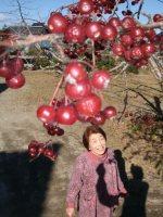 寒風に揺れる小りんご。斉藤さんは「野にエサがなくなると鳥も食べにくる」と笑う
