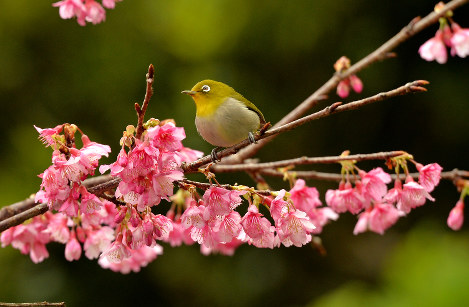 Photo Journal: Chilling in the cherry blossoms