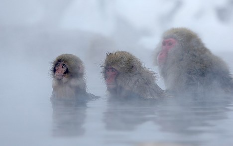 Photo Special: Japanese monkeys soak blissfully in Nagano hot springs