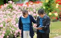 1冊のアルバムを手に、大久保三夫さん(63)と恵子さん(58)夫妻は、鮮やかなバラの中を歩いた。アルバムには、今も見つからない1人娘・真希さん(当時27歳)の写真。夫妻は毎年、宮城県亘理町の自宅から車で1時間半かけてこのバラ公園を訪れ、アルバムの写真と同じ場所を探す。たくさん写真を撮ったバラ園。自宅に飾られた真希さんの大きな写真も、ここで撮影した。「真希ちゃん、今年もきたよー」。三夫さんは語りかけた=山形県村山市で2015年6月9日、小川昌宏撮影