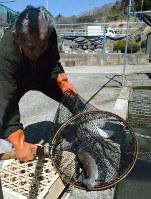 甲斐サーモンの養殖に取り組む山梨県養殖漁業協同組合の津野正康組合長
