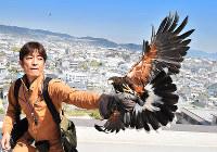 カラスなどを駆除するためタカを飛ばす鷹匠の田中和博さん。自然の摂理を生かして環境にやさしい駆除方法と注目を集める=兵庫県伊丹市で4月12日、山崎一輝撮影