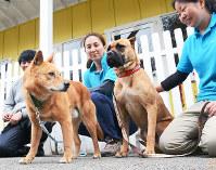 動物愛護センターなどから保護された犬を見つめる大西さん(中央)=広島県神石高原町上豊松で2016年4月13日、真下信幸撮影