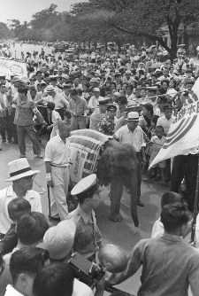 The elephant now known as Hanako arrives in Tokyo in September 1949. (Mainichi)