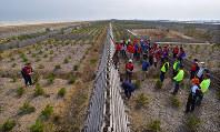 2年前、最初に植林されたクロマツが防風柵に仕切られて整然と並ぶ北釜地区の沿岸部。この日はボランティアが訪れていた。計画では幅200メートル、長さ5キロにわたって海岸林を再生する。左端には高さ7・2メートルの防潮堤が見える=宮城県名取市で4月16日、手塚耕一郎撮影