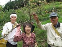 青梅を収穫する(左から)寒川善夫さん、母の賀代さん、父の殖夫さん=和歌山県田辺市龍神村で