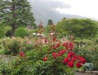 バラなどが美しく咲く箱根強羅公園