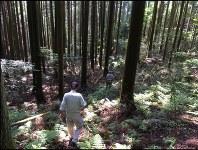 森の中を案内役のおじさんの後ろについて歩く