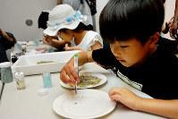ワークショップで「チリモン」を探す子ども=大阪府岸和田市のきしわだ自然資料館で、井川加菜美撮影