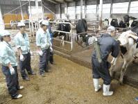 実習先の「哺育・育成預託センター」で受精卵移植を見学する酪農経営科の1年生