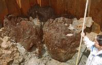 出雲大社境内で見つかった鎌倉時代の本殿の巨大柱=2000年、尾籠章裕撮影