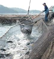 漁業にも進化は関わっている=香川県直島町で、岩崎邦宏撮影