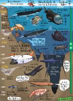 深海魚の不思議