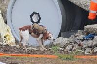 映像や位置などを伝えるサイバースイーツを着用し、においを頼りに要救助者を捜索するサイバー救助犬=仙台市青葉区で2016年11月11日午前11時9分、喜屋武真之介撮影