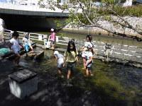 堀川周辺で行われた一斉大掃除。堀川1000人調査隊を含め、多くの市民が参加した=名古屋市北区で