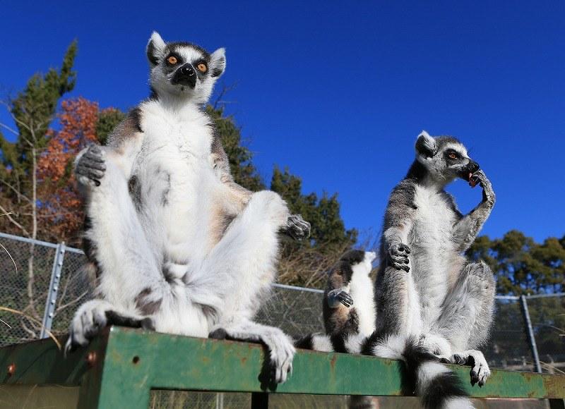 今日保存した最高の画像を転載するスレ 575 [無断転載禁止]©bbspink.comYouTube動画>12本 ->画像>999枚
