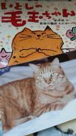 在りし日のコロと、彼にささげた絵本です。老猫が頑張るお話です