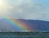 虹が架かる湖西の山並みを背景に飛び立つ水鳥=滋賀県野洲市吉川で、金子裕次郎撮影