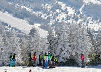 大自然の中でスキーを楽しむ=長野・志賀高原焼額山スキー場で、山崎一輝撮影