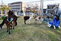 百年の丘でアルパカを放牧する生徒たち=堺市美原区の府立農芸高で、佐々木雅彦撮影