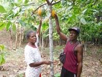カカオの栽培に取り組む夫婦=インドネシア・パプア州で、オルター・トレード・ジャパン提供