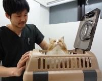 動物病院に連れて行く際には、上部が開くタイプのキャリーケースがお勧めだ