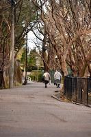 校舎に向かう坂道。春は桜、秋は紅葉が美しい景色を演出する=兵庫県宝塚市で、森園道子撮影