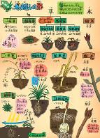 植物の越冬
