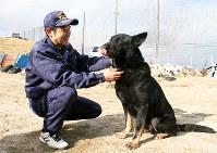 2016年度で引退することになったゲルマン号=大阪市此花区春日出中2の「浪花警察犬訓練所」で、道下寛子撮影