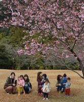 五分咲きとなった河津桜とお出かけサークル参加の親子=三重件紀北町便ノ山で2017年2月17日、栗藤和治撮影