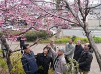 満開を少し過ぎたカンヒザクラの下に集まった崎山正美さん(手前左から3人目)、天川佳美さん(同2人目)ら、当時のボランティアたち=神戸市中央区で、木田智佳子撮影