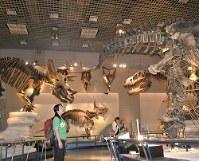 大きな恐竜たちに囲まれると自分がちっぽけな存在に感じる=東京都台東区の国立科学博物館で