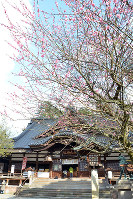 梅の花がほころんだ尾山神社=金沢市尾山町で、堀文彦撮影