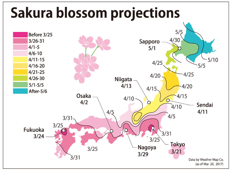Tokyo's First Cherry Blossoms Reported This Season (News)