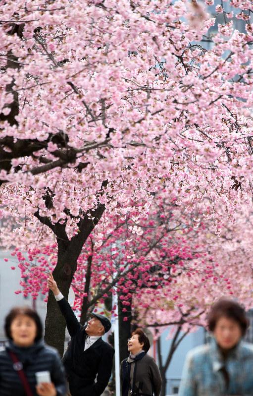 Photo Journal: Pink, pink, pink!