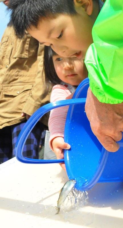 稚アユを放流する子どもら=岐阜市の長良川で