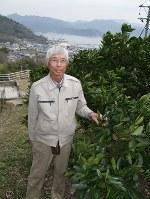 収穫の終わったネーブル畑で「手をかけ、育てる農業は面白い」と話す濱田さん