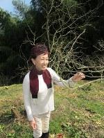 サンショウの木を前に「芽が少しふくらんでいますね」と解説する松田美智子さん=和歌山県紀美野町の「宇城農園」で
