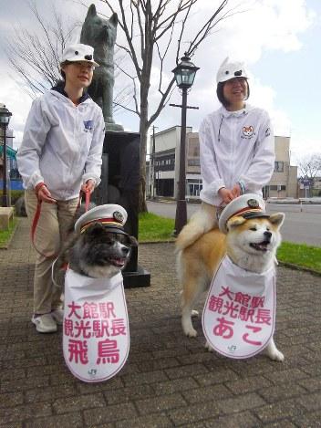 秋田犬の画像 p1_36