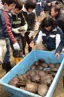 児童たちが捕獲したミドリガメ=奈良市の猿沢池で2014年年2月19日