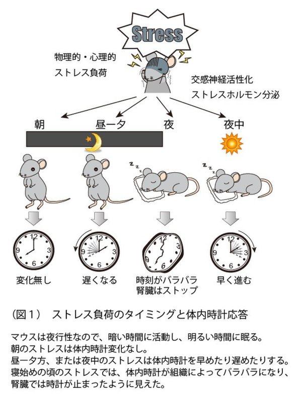 早稲田大学・田原優助教提供を編集部で一部改変