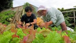 鎌を手に、島のお年寄りから野菜の収穫方法を教わる研修医の先生。体験から島の生活を学んでもらっています=筆者提供