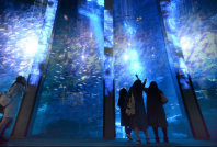 Images projected onto a fish tank to depict snow and ice in the sea combine with real fish to create a dreamlike atmosphere, at Yokohama Hakkeijima Sea Paradise in Yokohama's Kanazawa Ward on Nov. 6, 2015. (Mainichi)
