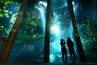Images projected onto a fish tank and living fish create a dreamlike atmosphere at Yokohama Hakkeijima Sea Paradise in Yokohama's Kanazawa Ward on Nov. 6, 2015. (Mainichi)