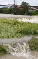 Rice plants that were about to be harvested are hit by water after the Yoshida River overflowed, in the Miyagi Prefecture town of Taiwa, on Sept. 11, 2015. (Mainichi)