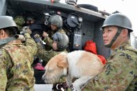 A member of the Self-Defense Forces lifts a dog into a helicopter that came to rescue people from the rooftop of the Apita shopping complex in Joso, Ibaraki Prefecture, on Sept. 11, 2015. (Mainichi)