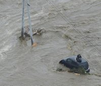 A man clings to a power pole, left, while another resident waits for help on the top of a car after the Kinugawa River overflowed in heavy rain, on the afternoon of Sept. 10, 2015. (Mainichi)