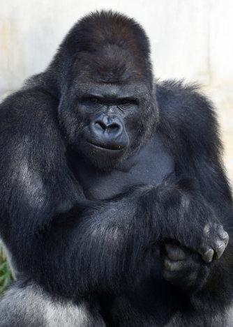 東山動植物園:「イケメン過ぎる...