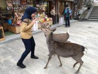 奈良を訪れたザイナブさん=2015年12月6日撮影